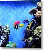 Aquarium 1 Metal Print