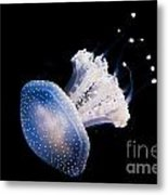 Aquarium Berlin Metal Print