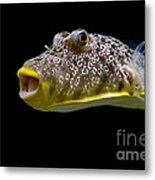 Aquarium Fish Metal Print