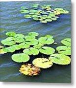 Aquatic Plants Metal Print