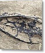Aquatic Reptile Skull Metal Print by Science Photo Library