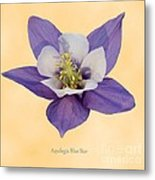 Aquilegia 'blue Star' Metal Print