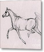 Arabian Horse  2014 02 25b Metal Print