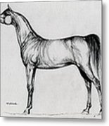 Arabian Horse Drawing 34 Metal Print