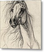 Arabian Horse Drawing 37 Metal Print
