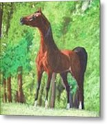 Arabian Horse In A Forest Clearing Metal Print