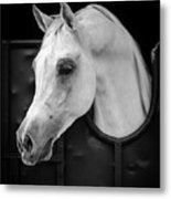 Arabian Horse Metal Print