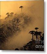 Araucaria Dawn Chile Metal Print