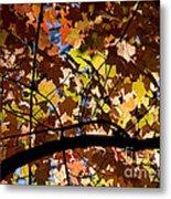 Arboretum Fall Metal Print
