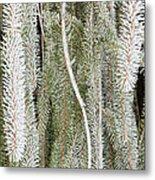 Arboretum Hoar Frost 2 Metal Print