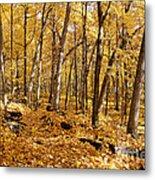 Arboretum Trail Metal Print