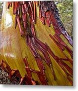 Arbutus Tree Trunk Metal Print