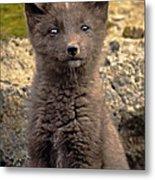 Arctic Fox Pup Alaska Wildlife Metal Print
