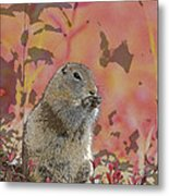 Arctic Ground Squirrel In Autumn Colors Abstract Metal Print