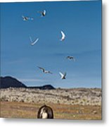 Arctic Terns With Mare And Foal Metal Print