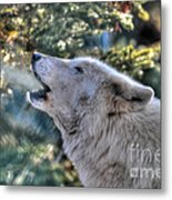 Arctic Wolf Song Metal Print