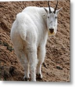 Are You Following Me Metal Print