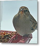 Are You Sure You Want This Seed? Metal Print