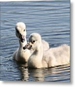Aren't You Going To Share? Metal Print