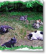 Argentina Cat Park Metal Print