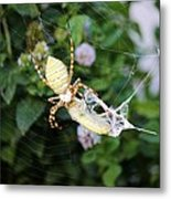 Argiope Spider Top Side Horizontal Metal Print