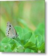 Argus Rings Butterfly Metal Print
