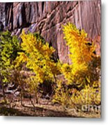 Arizona Autumn Colors Metal Print