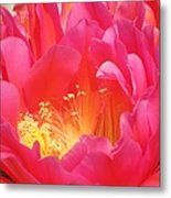 Arizona Cactus Beauty Metal Print