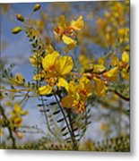 Arizona Gold Metal Print