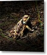 Arizona Horned Lizard Metal Print