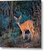 Arizona Deer Sunset Metal Print