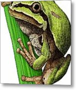 Arizona Tree Frog Metal Print