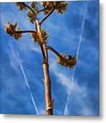 Arms Spread Wide Metal Print