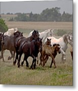 Arrington Ranch Herd - 2 Metal Print