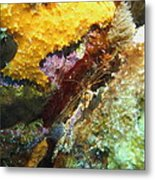 Arrow Crab In A Rainbow Of Coral Metal Print