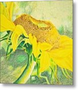 Sunflower Print Art For Sale Colored Pencil Floral Metal Print