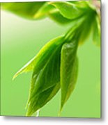 Art Greens Metal Print