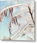 Artistic Abstract Closeup Of Frozen Tree Branches Metal Print