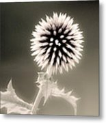 Artistic Black And White Flower Metal Print
