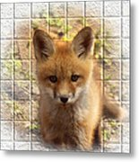 Artistic Cute Kit Fox Metal Print