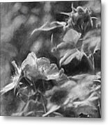 artistic painterly Black and white monochromatic two dogroses summer 2014 Metal Print