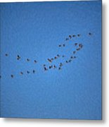 Artistic Painterly On The Way To Summer Stretch Of Geese Moving North Metal Print