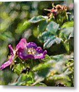 Artistic Painterly Two Dogroses Summer 2014. Metal Print