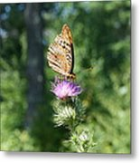 Artistic Butterfly Stand  Metal Print