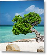 Aruba Tree Metal Print