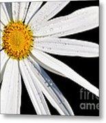As Bright As A Daisy... Metal Print