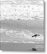 As  The Crow Flies Metal Print by Artist and Photographer Laura Wrede