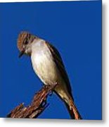 Ash-throated Flycatcher Metal Print
