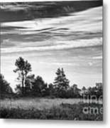 Ashdown Forest In Black And White Metal Print