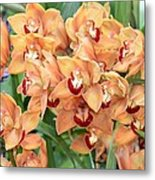 Asian Corsage Orchid Metal Print